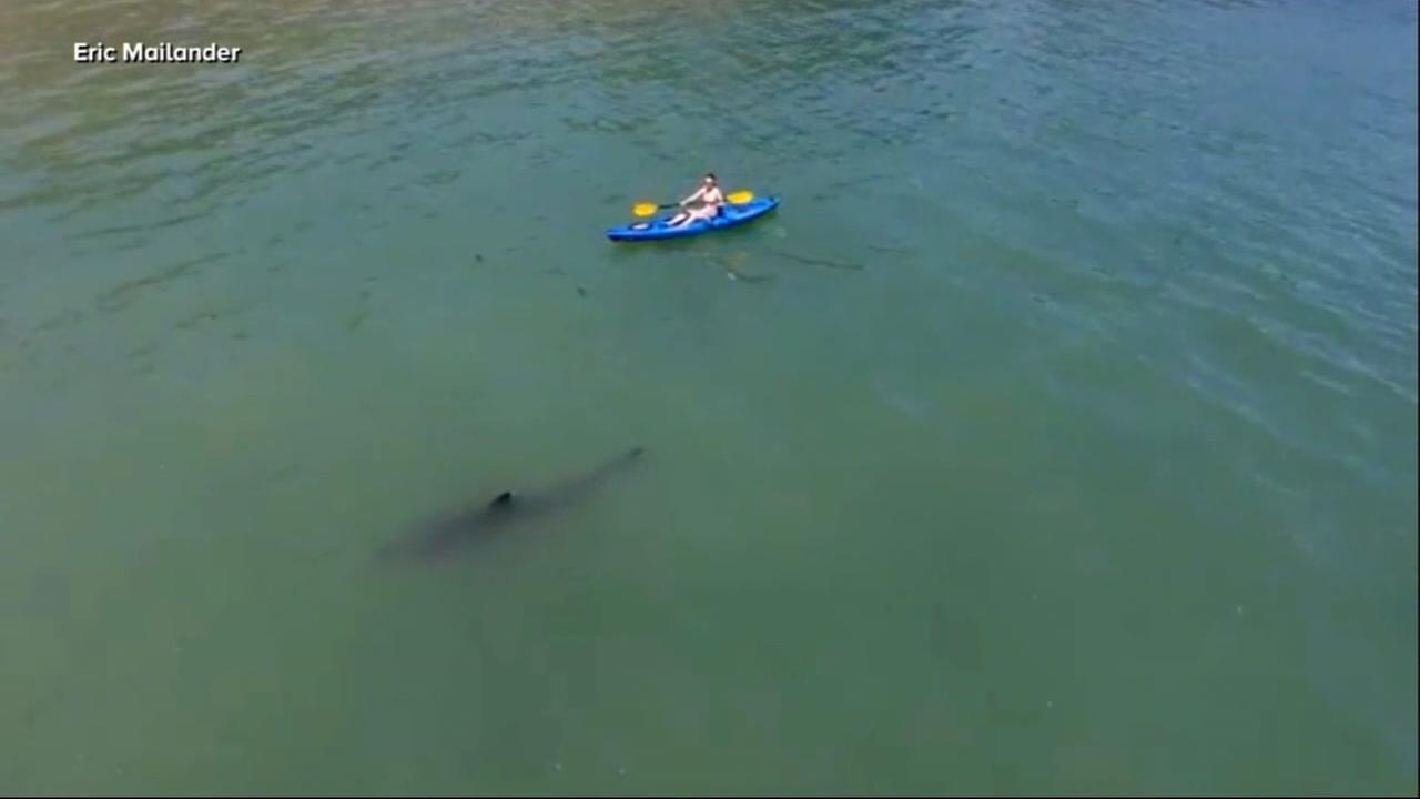 Stella Phols friend captured this image of a shark swimming just 10 feet away from the kayaker in Monterey Bay.