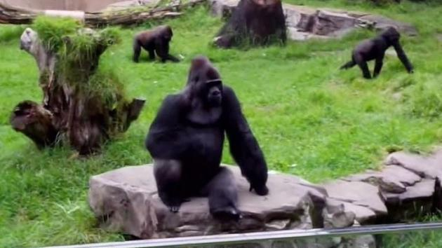 I-TEAM: Zoo knew dangers years before baby gorilla died