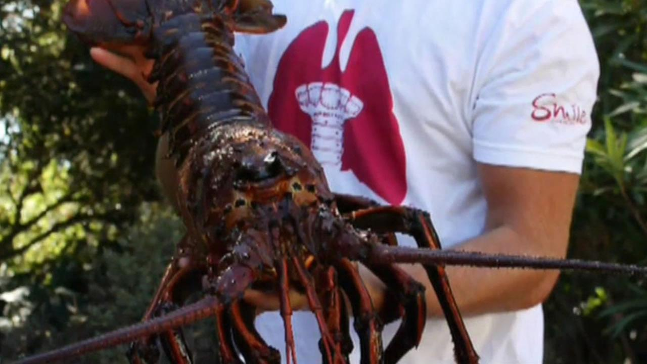 Man holds giants lobster