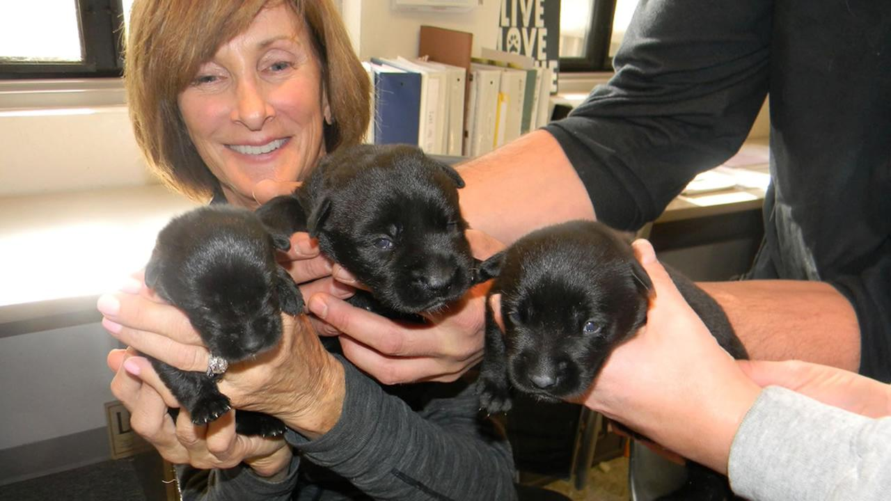 Lake Tahoe animal shelter helps seven puppies recover after they were found in a trash bin