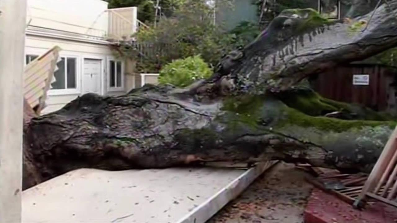 A massive oak tree crashed onto a home and a four unit building in Menlo Park on Saturday, Dec. 6, 2014.