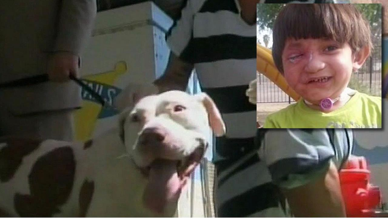 A judge has declared a pit bull named Mickey vicious, but declined to have him euthanized.