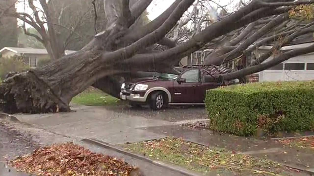 A massive tree fell on a Ford Explorer on Boxwood Drive in San Jose, Calif. on Thursday, Dec. 11, 2014. (ABC7 News)