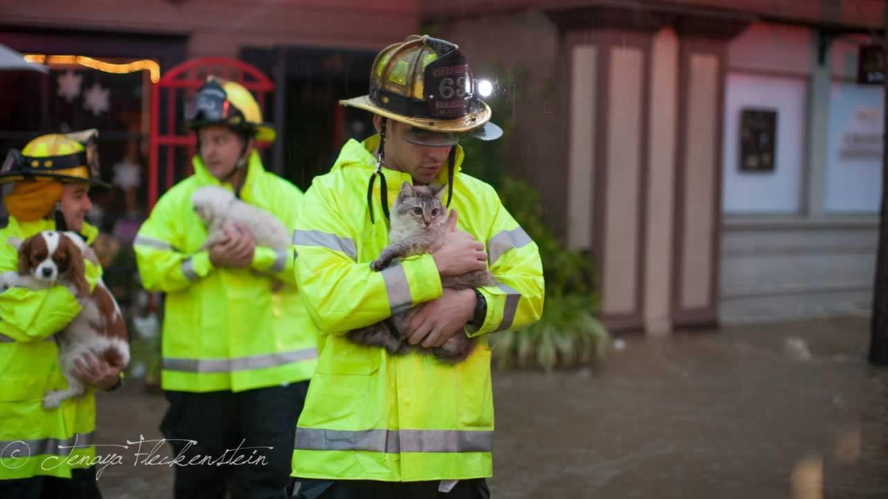 Firefighters had their hands full with cats and dogs they saved from the floodwaters.