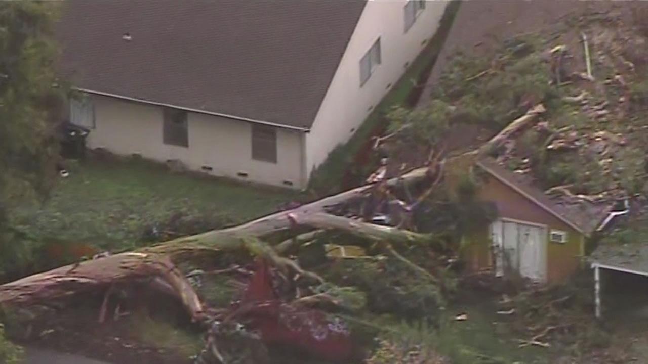 A giant Eucalyptus tree crashes on a care home on Trefry Court in Union City.