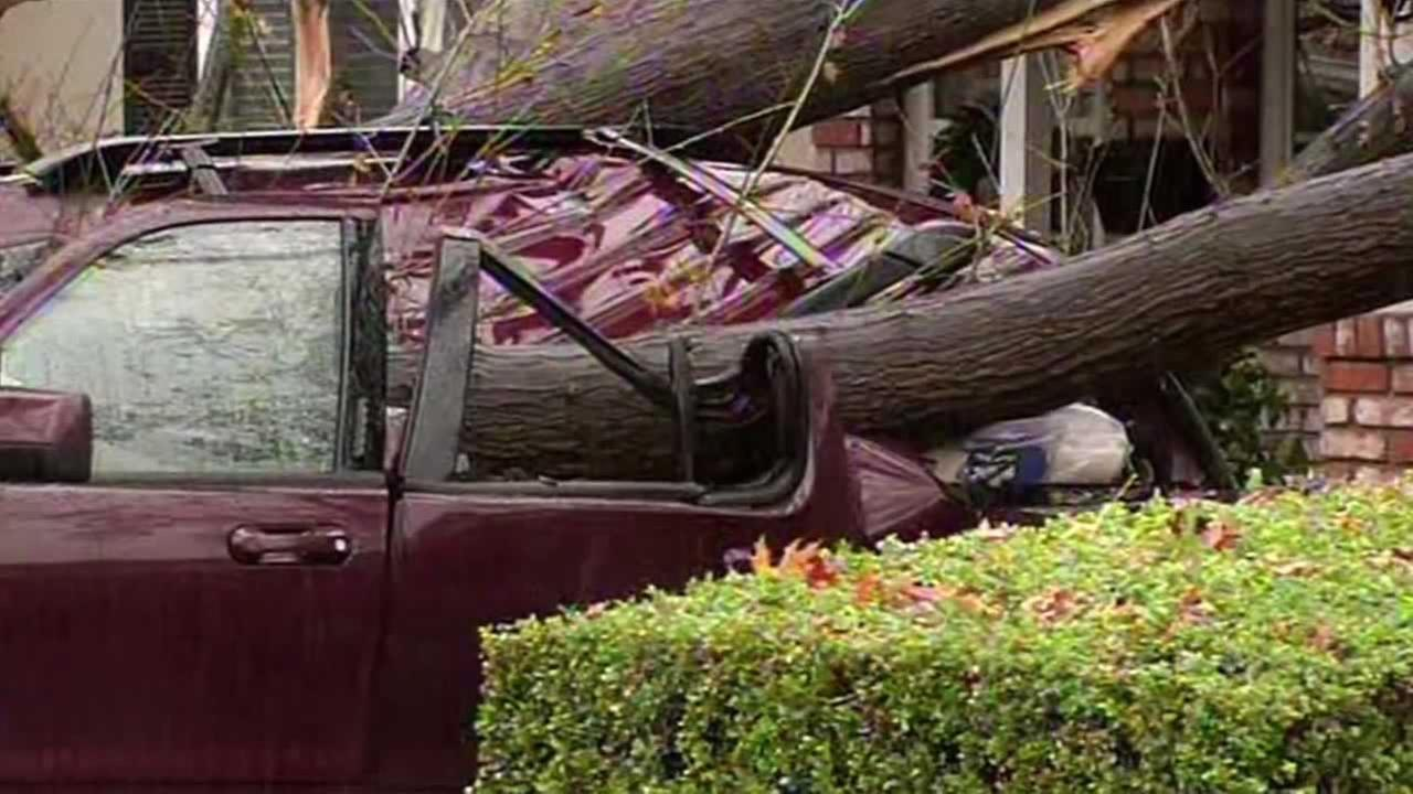 A tree crushes a parked car on Boxwood Drive in San Jose.