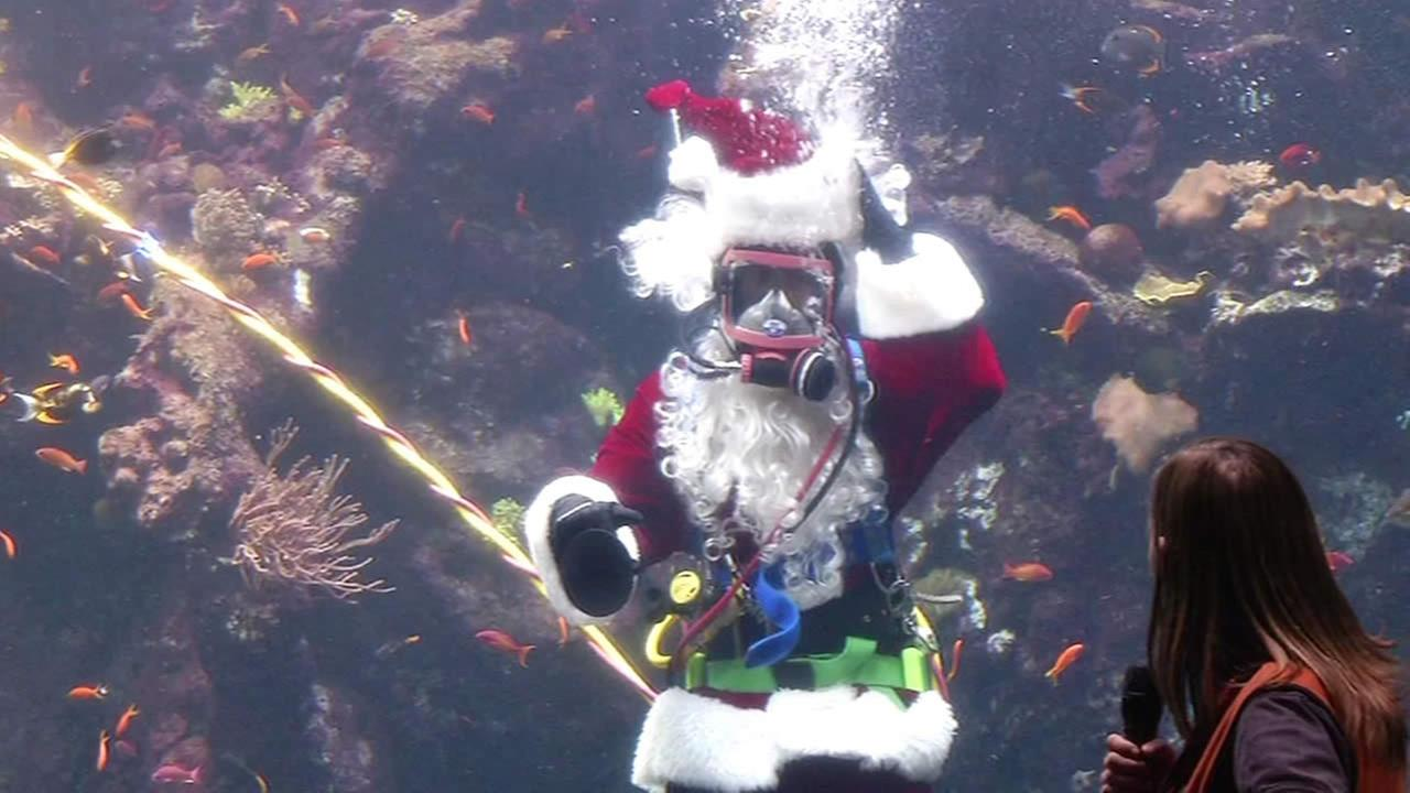 Scuba Santa at San Franciscos California Academy of Sciences on Wednesday, Dec. 17, 2014.