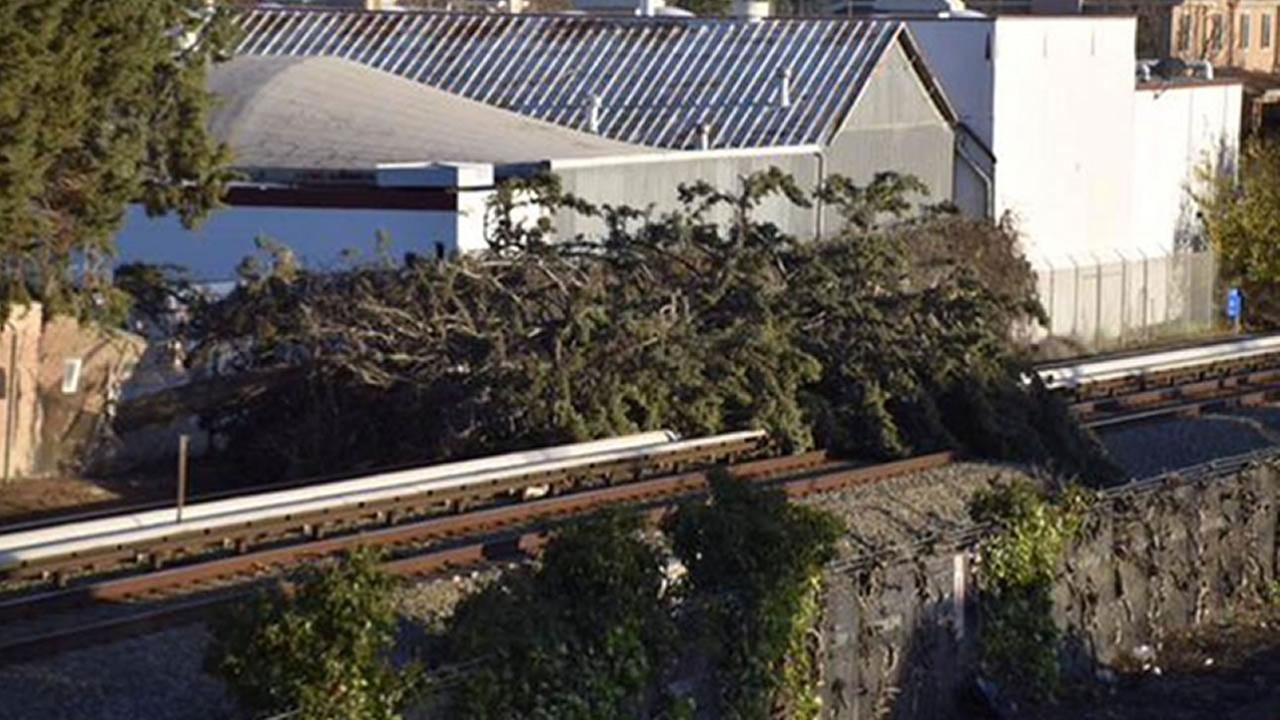 tree on BART tracks