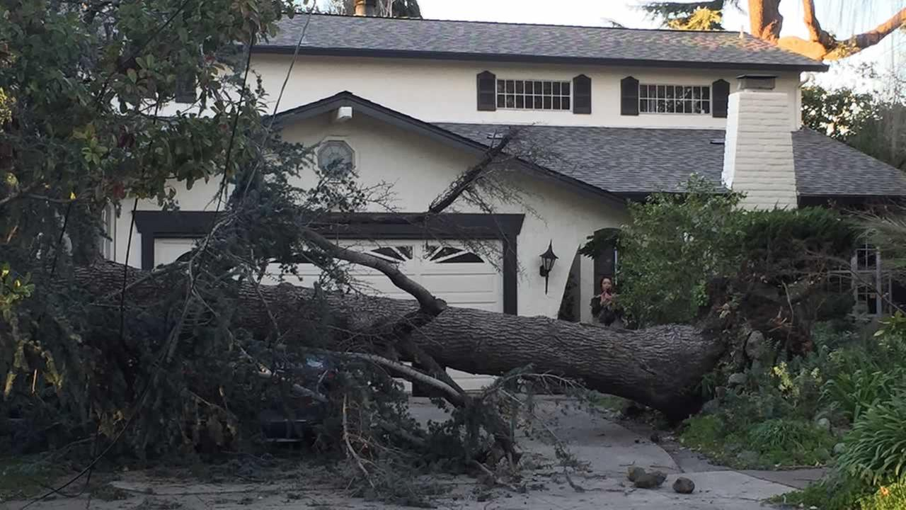 A tree that fell in San Jose, Calif. is seen on Wednesday, Dec. 31, 2014. (Image sent via uReport)
