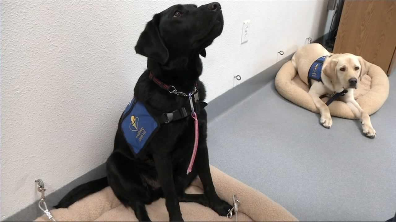 Dogs 4 Diabetics is training dogs to help people manage a potentially dangerous disease.
