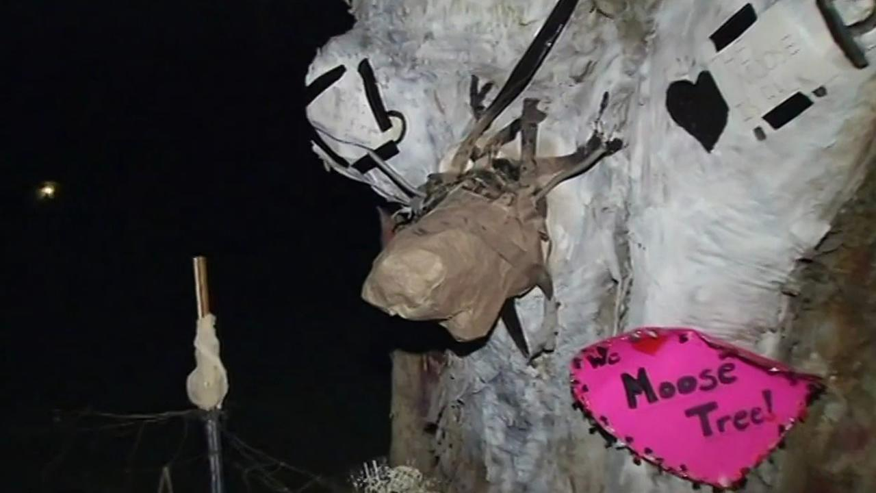 A stolen moose-shaped branch that was stolen from Napas famous moose tree on New Years Eve has been replaced by a paper mache version, Jan. 3, 2015.