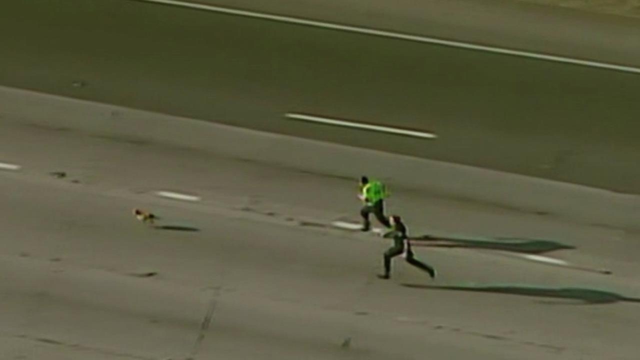 Loose dog shuts down traffic on Highway 50 in Sacramento.