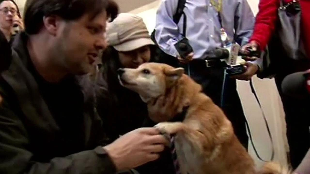 A purebred Shiba Inu named Hana was reunited with her family after being missing for three years, Oakland, Calif. Jan. 15, 2015.