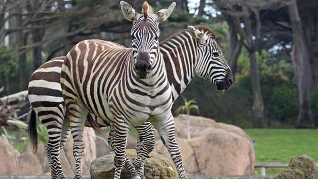 The San Francisco Zoo has several charming residents who could benefit from adoption.