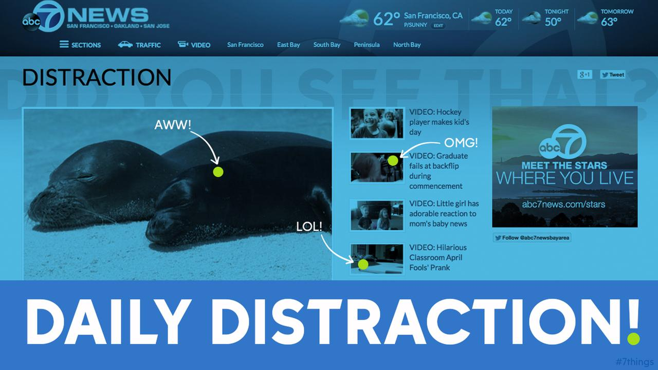 DID YOU SEE THAT? Get lost in our daily distraction section!
