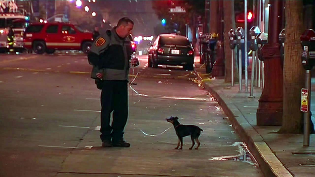 A dog was found alive on the third floor of a building after a deadly fire in San Franciscos Mission District on Jan. 29, 2015.