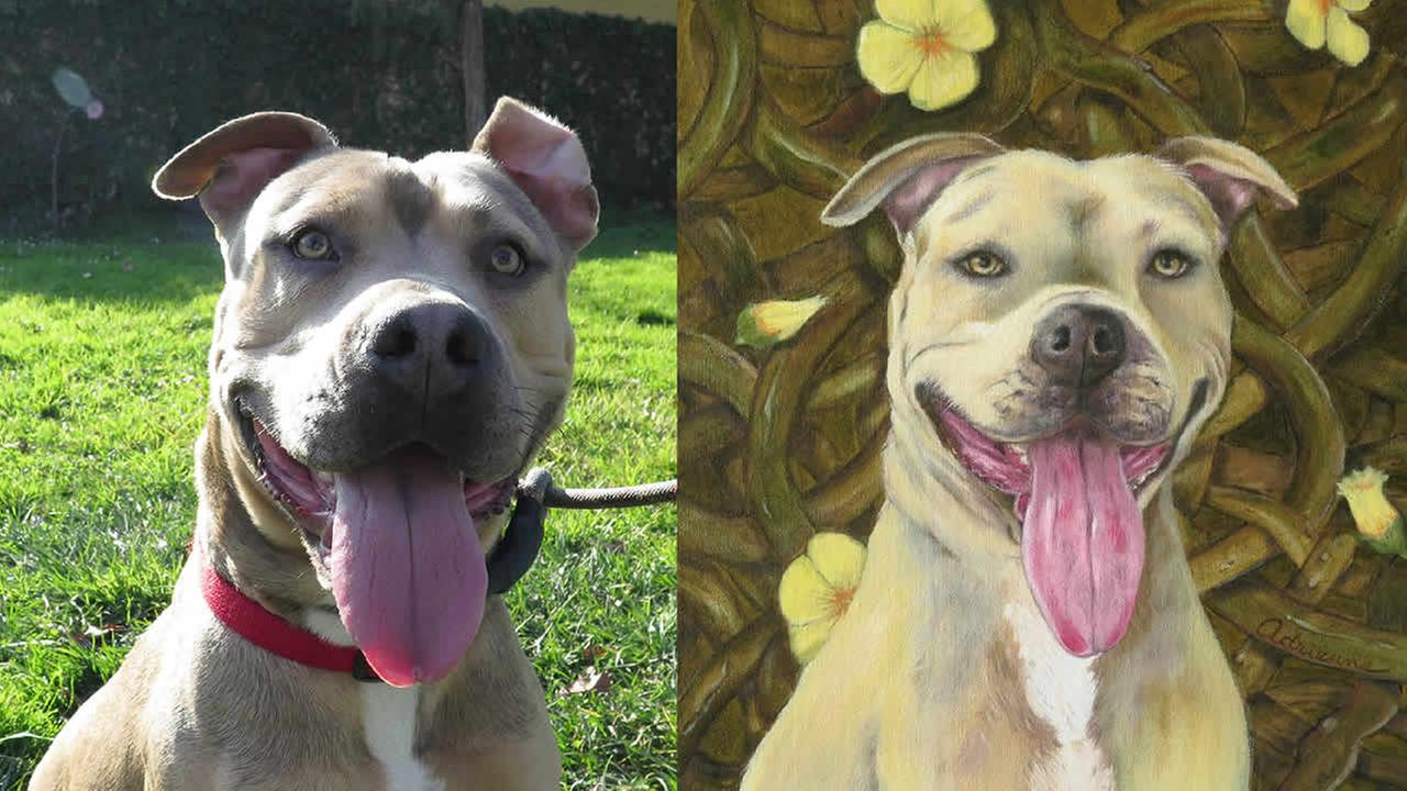 Bay Area artists created portraits of pets at Oakland Animal Services in the hopes of spurring adoptions.