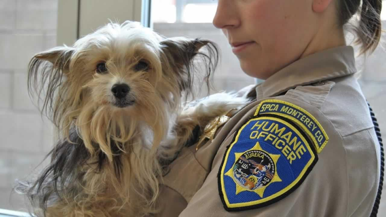 SPCA for Monterey County
