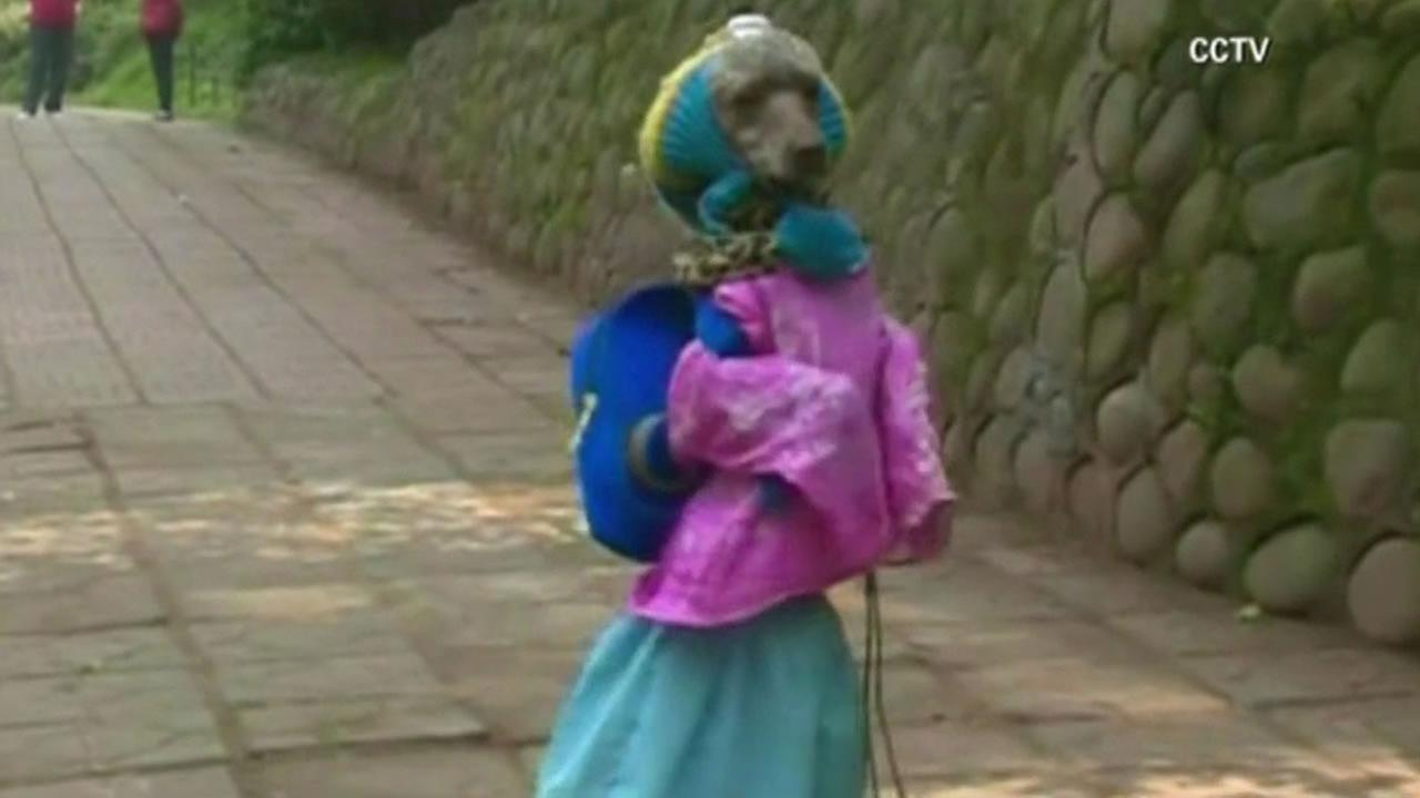 People in one Chinese city cant seem to get enough of a neighborhood dog often seen walking around in a dress and a hat.