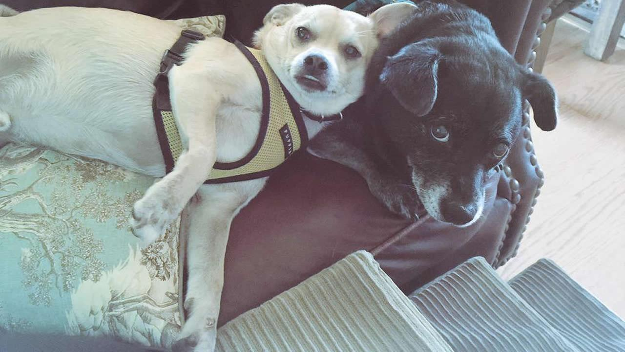 Meet Fabiola and Rafael! ABC7 News viewers are sending in photos of their dogs in honor of National Puppy Day on March 23, 2015.Photo submitted by Leilani/Twitter