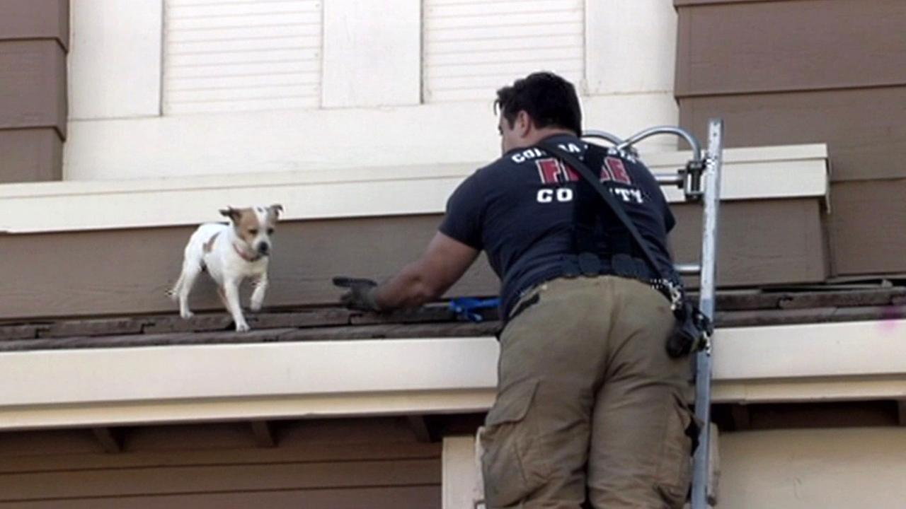 Dog rescued from roof of Antioch home.