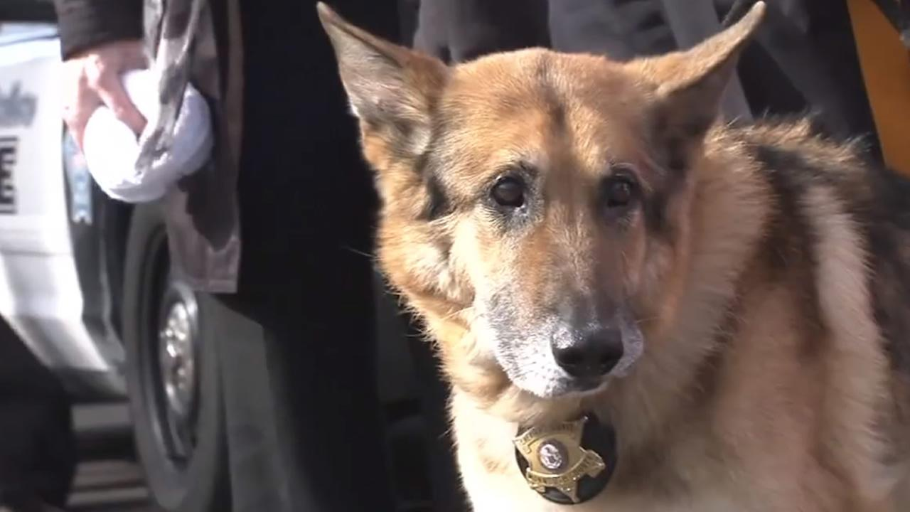 A long-serving police K-9 that was diagnosed with a fast-spreading cancer was honored with one final send-off before being put down in Robinsville, New Jersey on March 19, 2015.