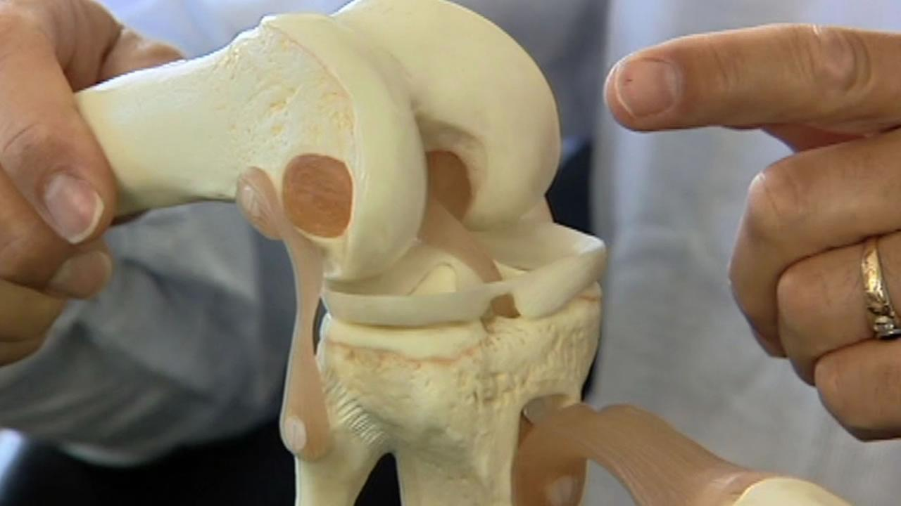 Knee model with bones showing an ACL