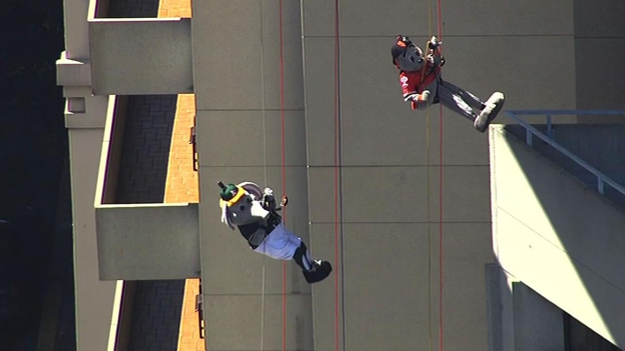 As mascot Stomper and SF Giants mascot Lou Seal rappel down side of hotel