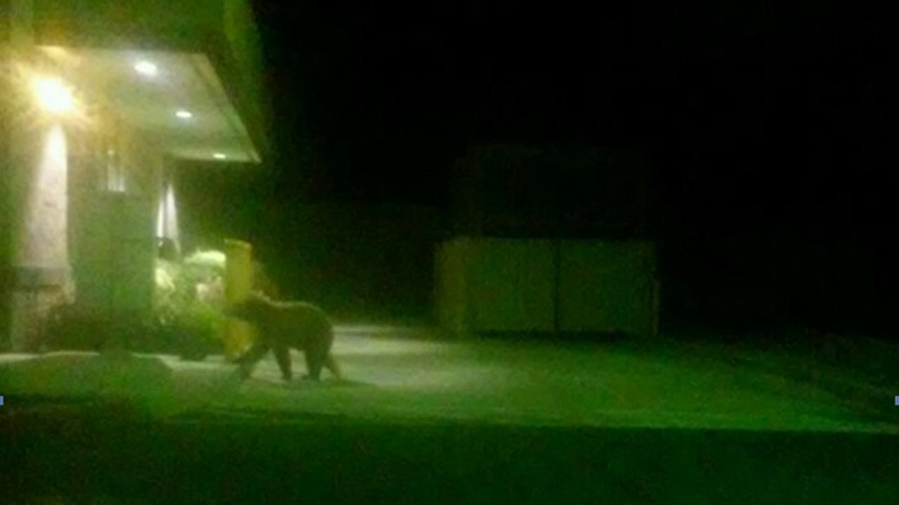 Bear spotted in Tracy (Tracy Police)