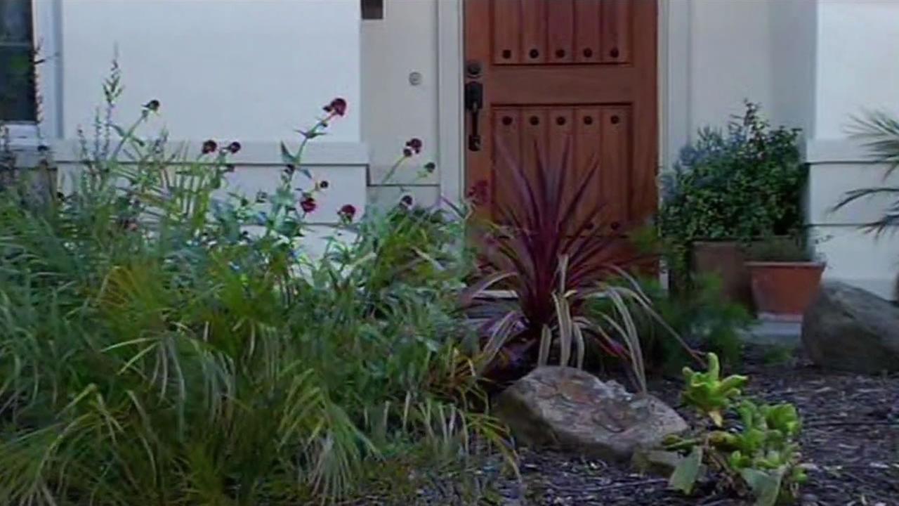 drought resistant lawn