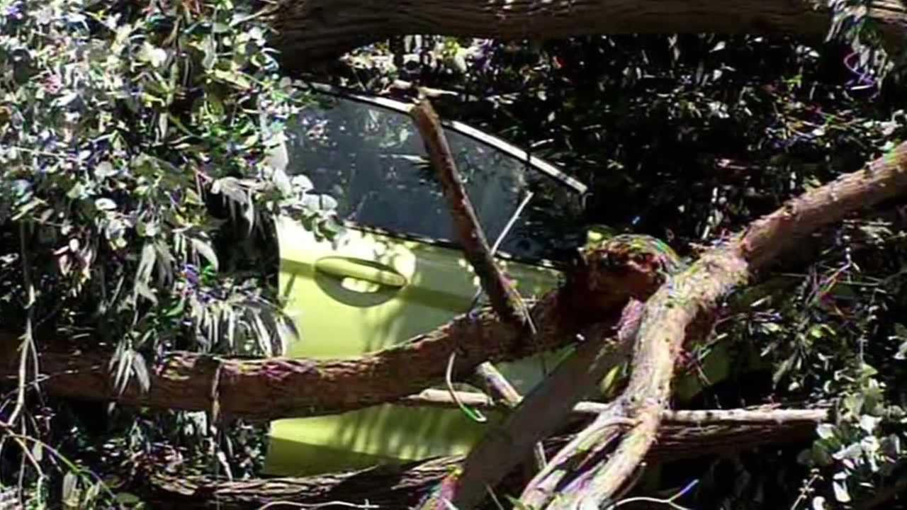 A large tree fell on a car as a woman was driving by near Lake Merritt in Oakland, Calif. on Thursday, April 16, 2015.