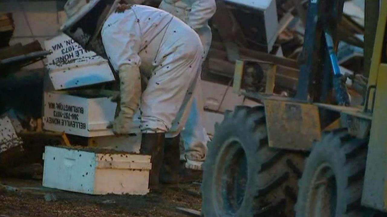 A truck filled with bees overturns near Seattle.