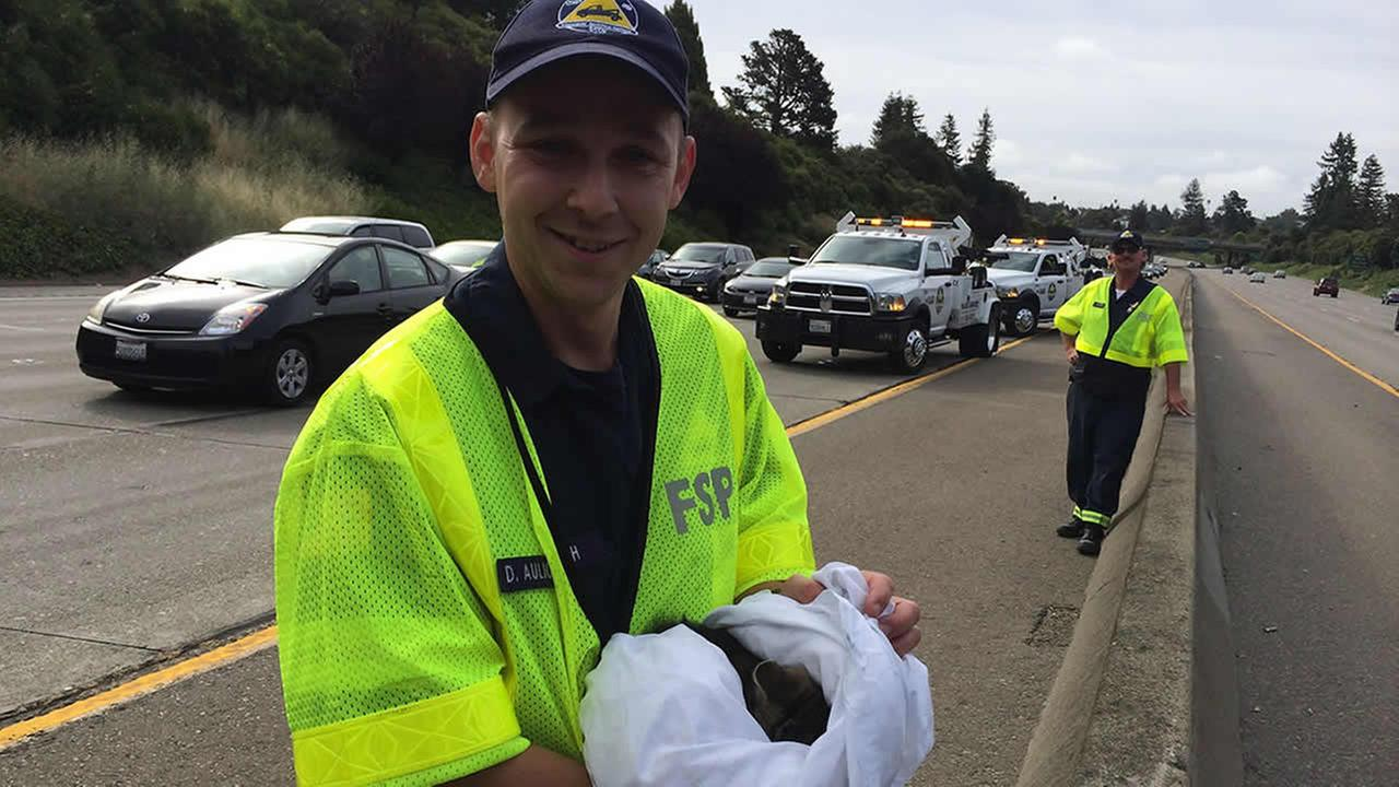 Freeway Service Patrol workers rescued a kitten on Interstate 580 at High Street in Oakland.