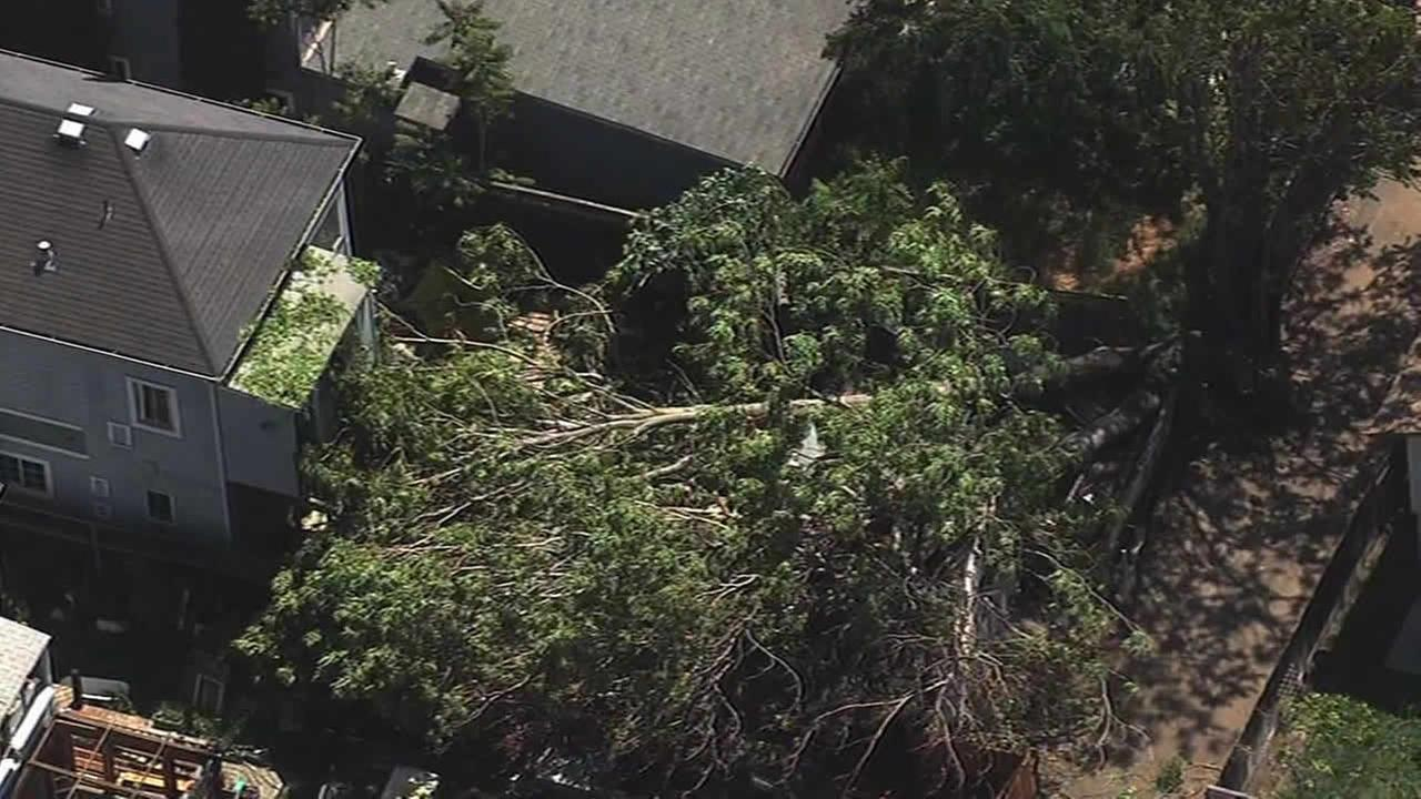 A massive tree fell on a detached garage and narrowly missed a home in San Jose, Calif. on April 23, 2015.