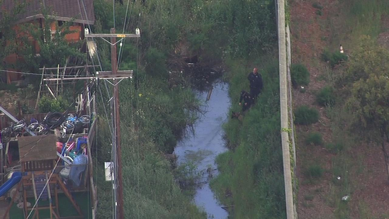 officers waded through tall grass with a K-9