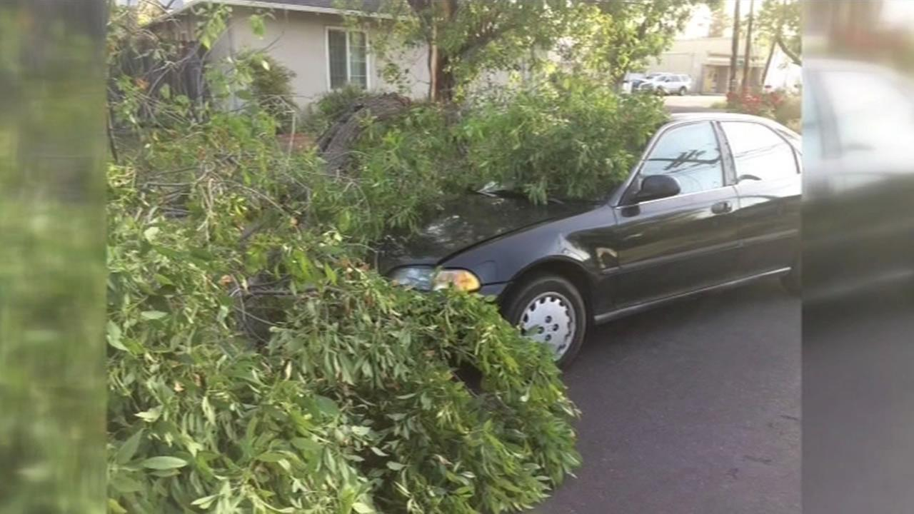 A tree branch fell on a car in Pleasant Hill after three earthquakes hit Contra Costa County on Wednesday, May 6, 2015. (KGO)