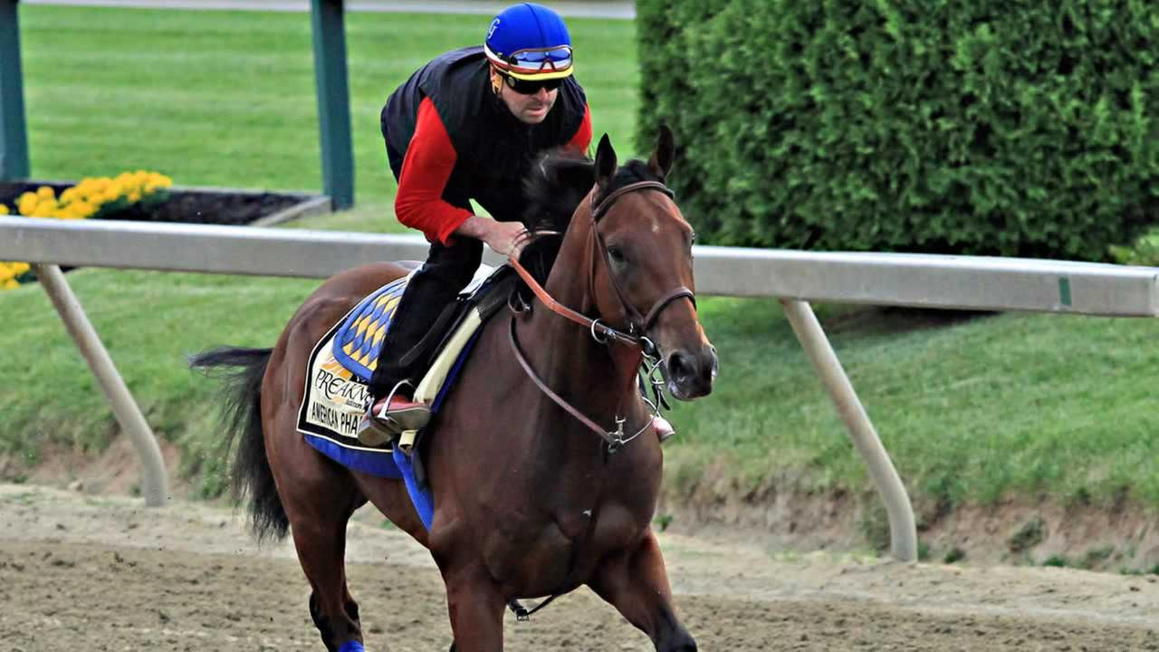 Exercise rider Jorge Alvarez gallops Preakness Stakes entrant American Pharoah at Pimlico Race Course in Baltimore, Friday, May 15, 2015.