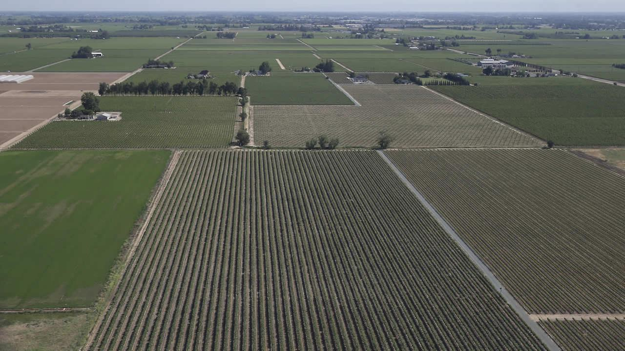 In this photo taken Tuesday, April 28, 2015, is an aerial view of a grape vineyard near Lodi, Calif.
