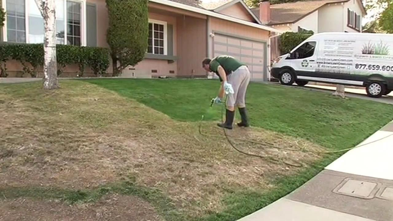Bill Schaffer from Brown Lawn Green paints a brown lawn green
