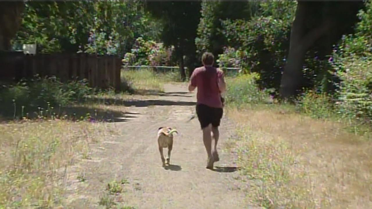 A man jogs with his dog along the popular Three Creeks Trail in San Joses Willow Glen neighborhood on Wednesday, June 3, 2015.