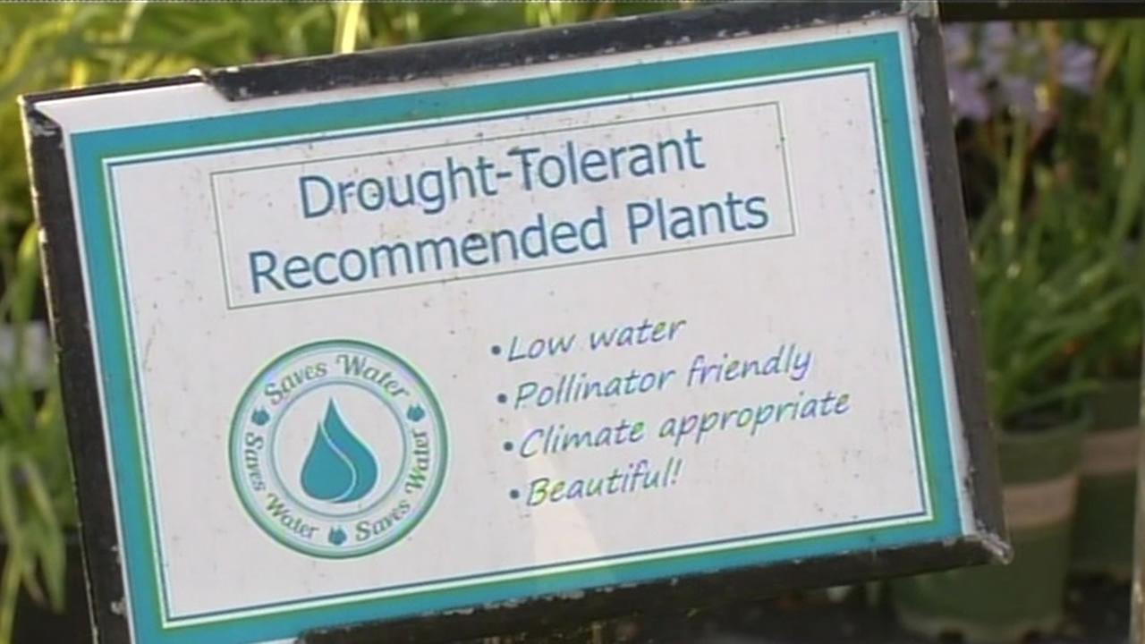 A sign at Summer Winds nursery in the South Bay shows which plants are drought tolerant, June 11, 2015.