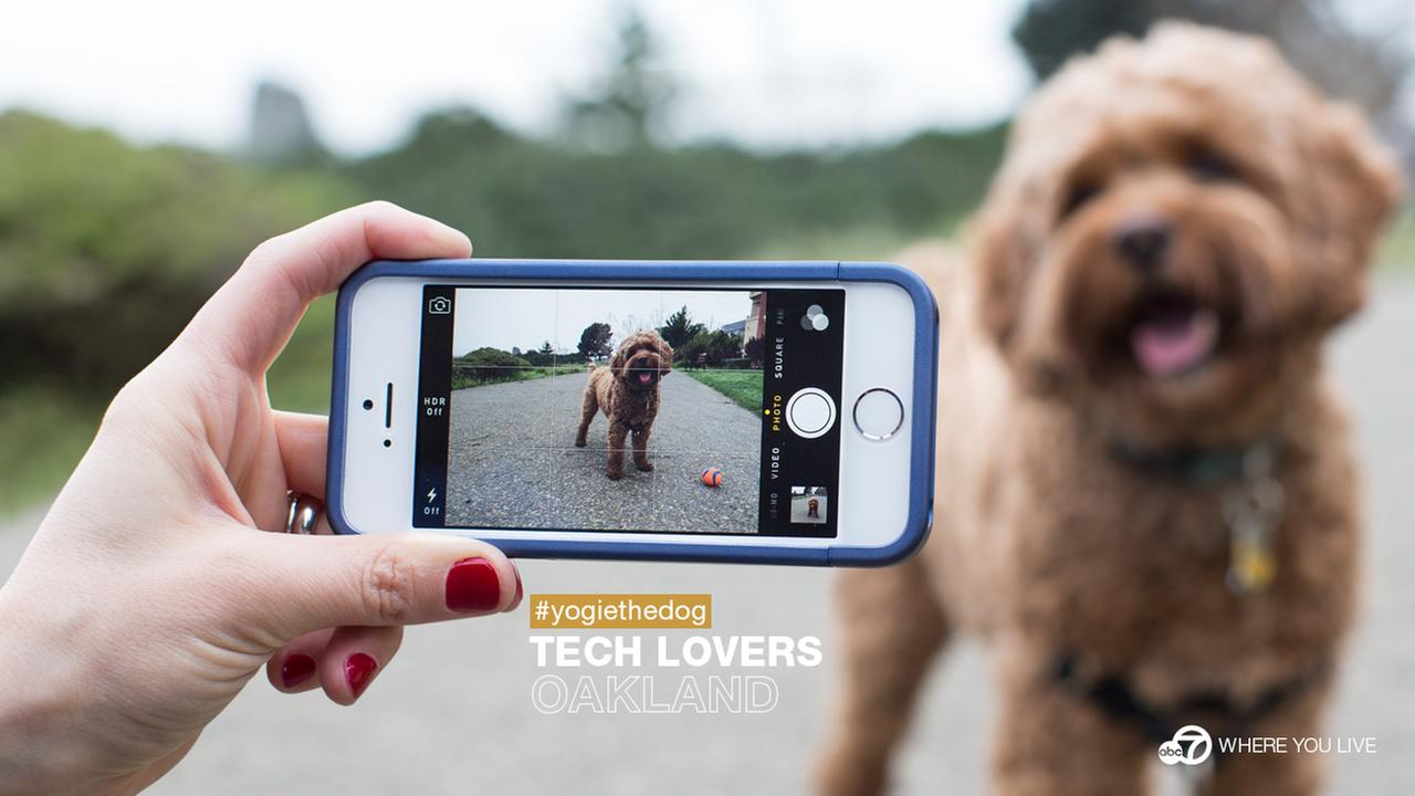 THE TECH LOVERS: People in the Bay Area love their technology and their pets! Meet #yogiethedog from Oakland. Share your pet pics with #abc7pets and maybe youll see them on TV!