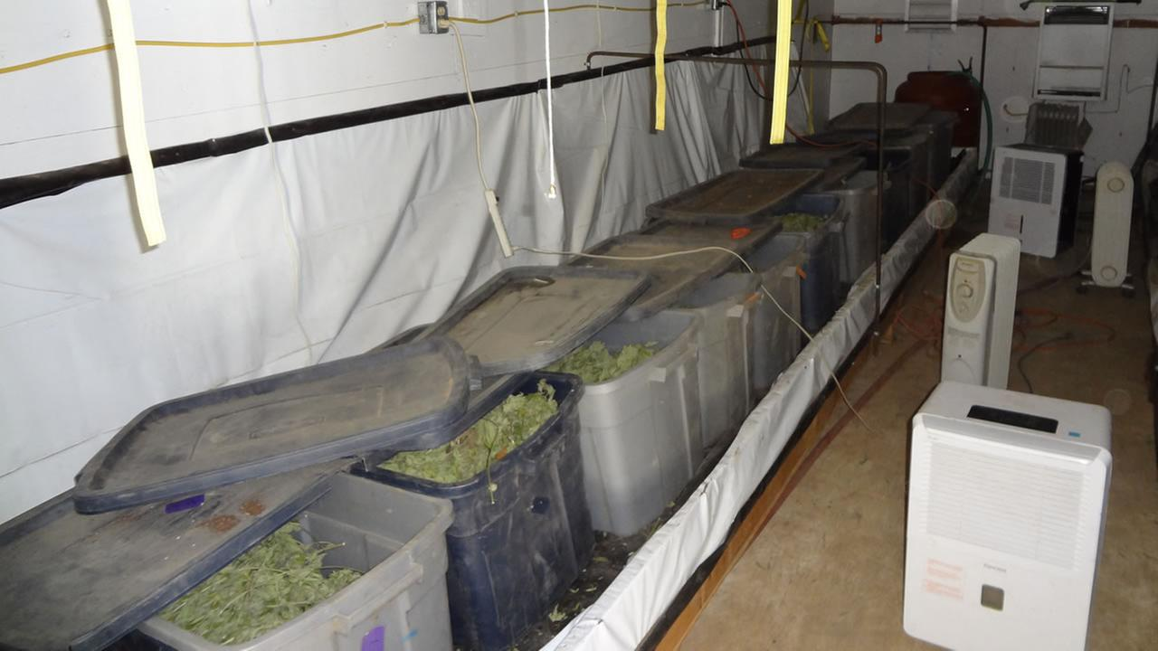 The Humboldt County Sheriffs Office served seven search warrants from Monday, June 22, 2015 to Thursday, June 25, 2015, seizing 23,211 marijuana plants worth $26.5 million.Humboldt County Sheriff's Office