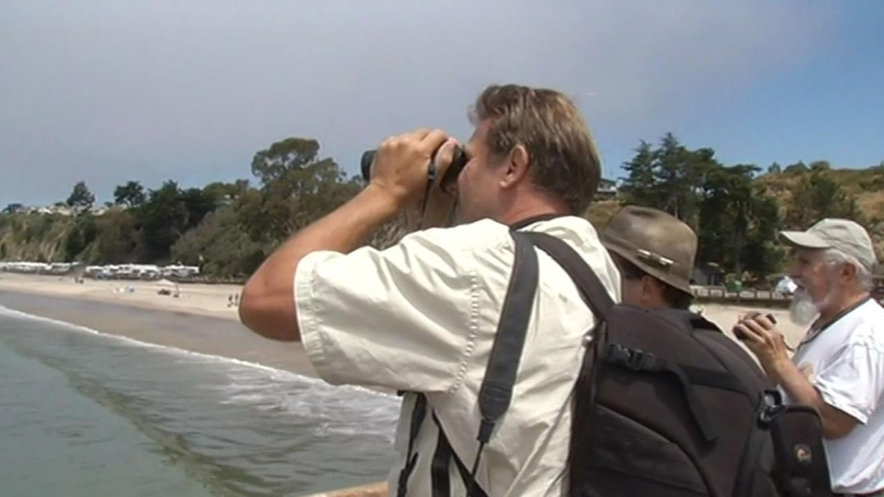 Salinas resident R.J. Adams watches sharks off the coast of Aptos, Calif.