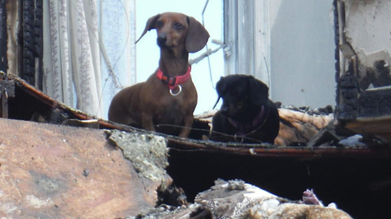 Firefighters rescued two dogs who were believed to have perished during a fire in Chester County.