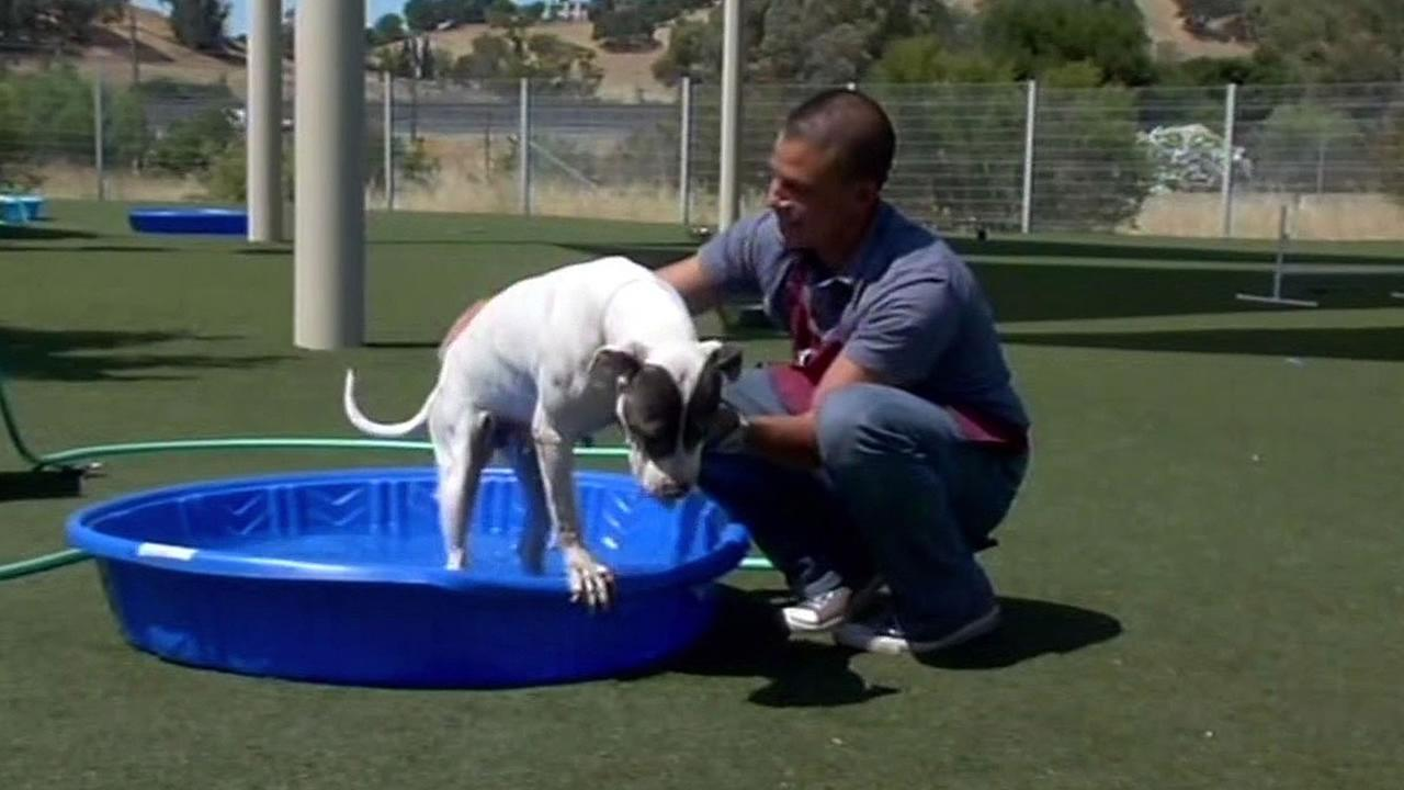 dog swims in kiddie pool at Contra Costa Animal Services center