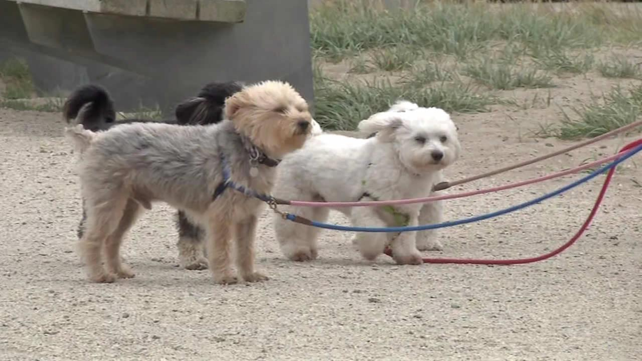 Dogs on-leash at Crissy Field.