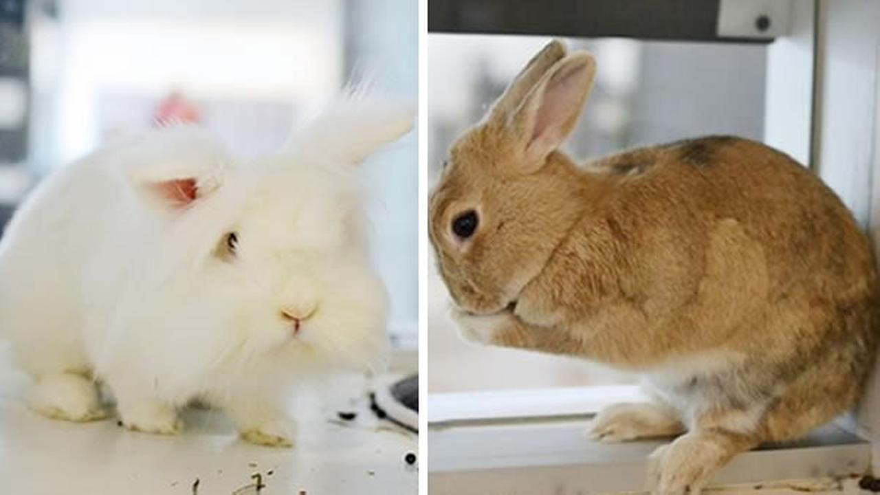 Meet this weeks Perfect Pets -- Fluff and Lulu.