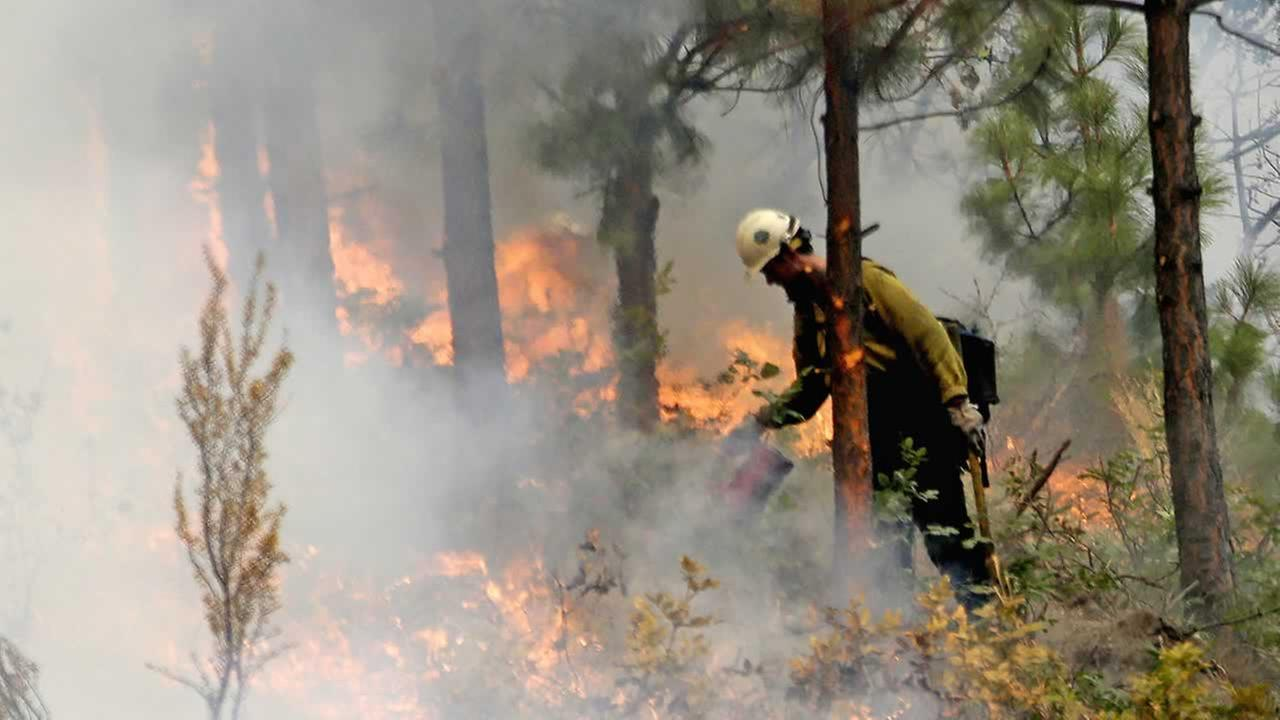 A firefighter uses a drip torch to burn the edges of an area up to a fire break Thursday, Aug. 27, 2015, in Chelan, Wash.