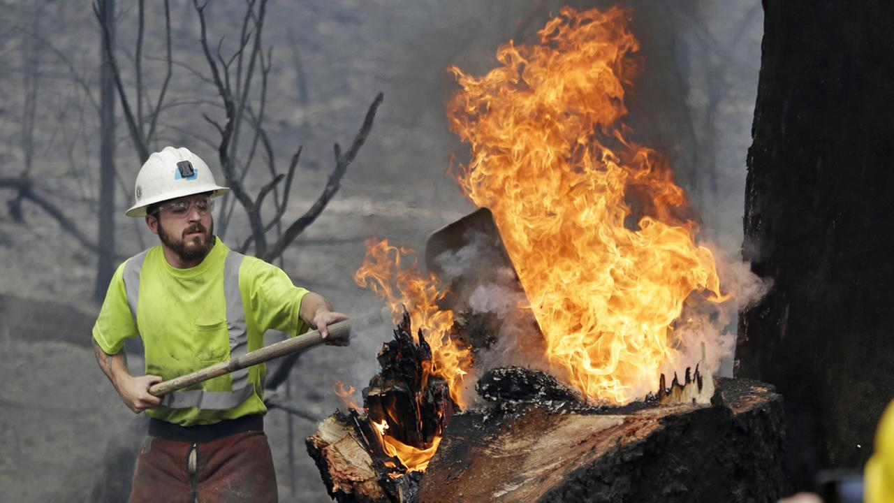 Utility worker Michael Quinliven shovels dirt onto a burning stump so he can cut down the charred ponderosa pine next to it Monday, Sept. 14, 2015, in Middletown, Calif.